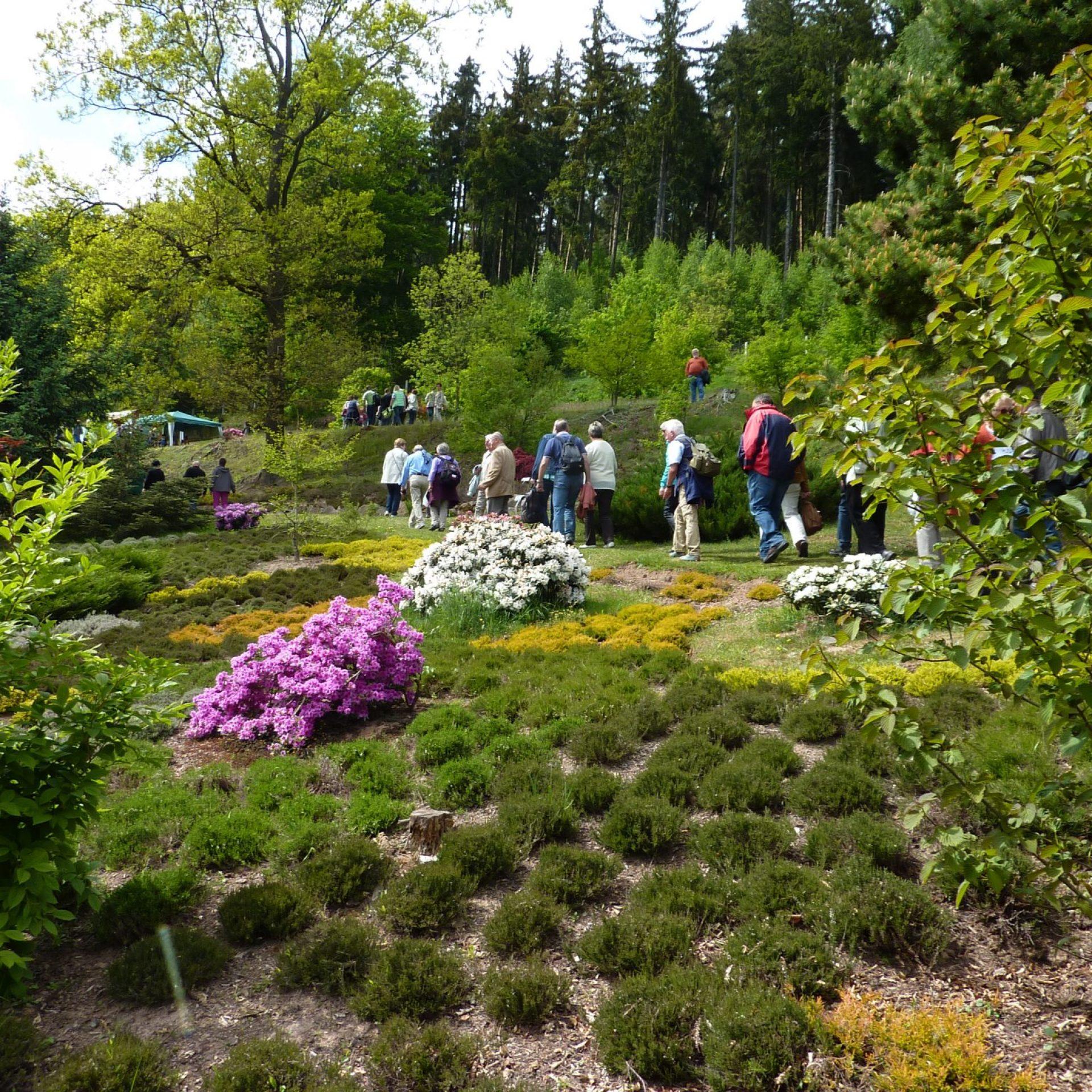 Forstbotanischer Garten in Wasungen