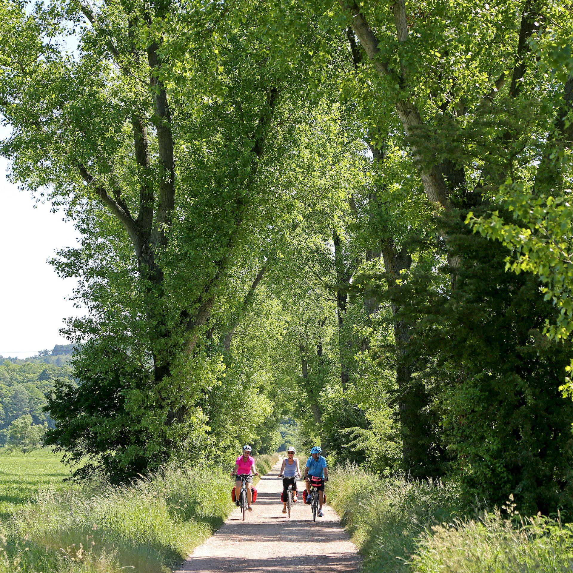 Werratalradweg zwischen Gerstungen und Sallmannshausen