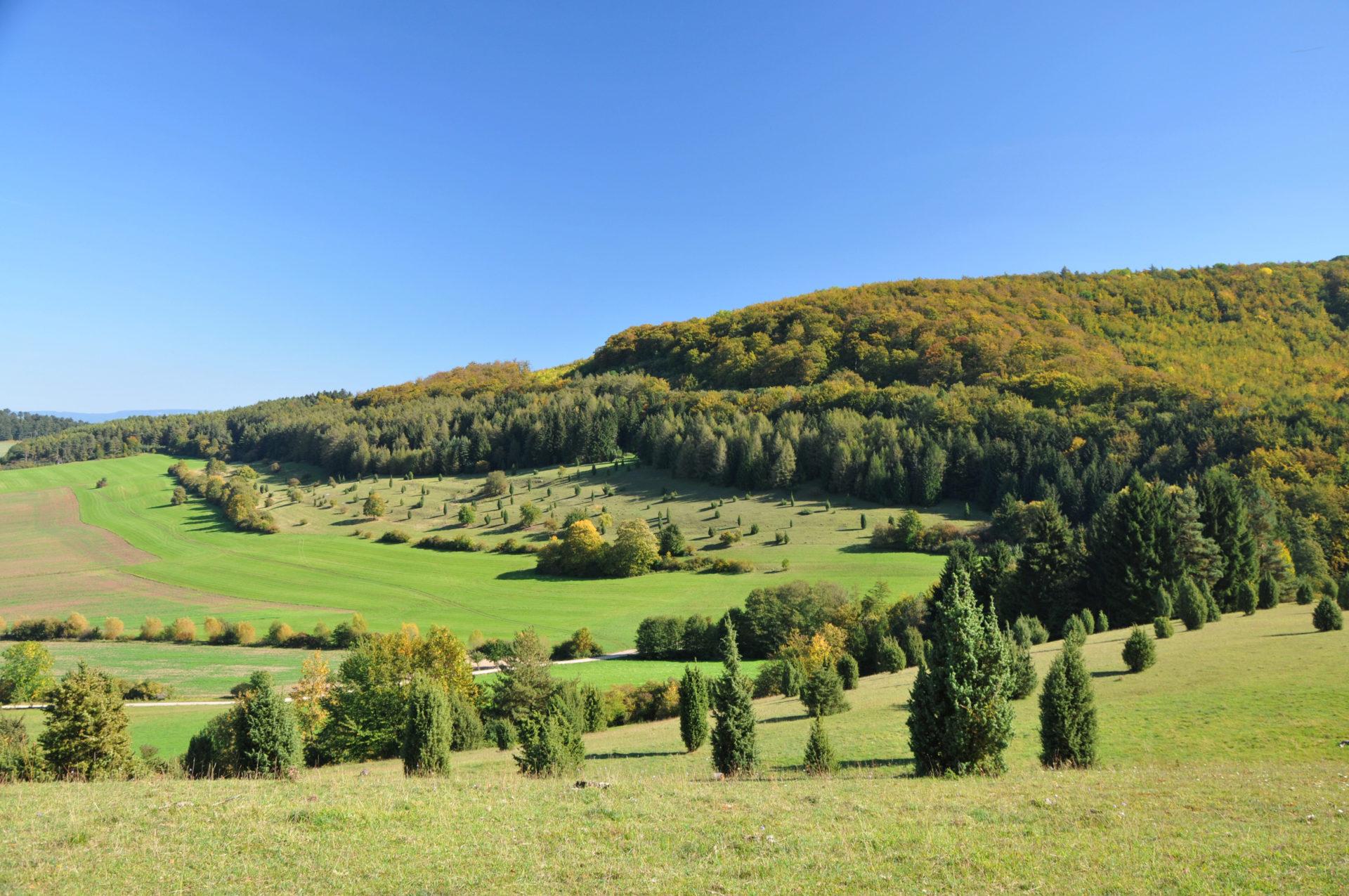 Wiesenthaler Schweiz