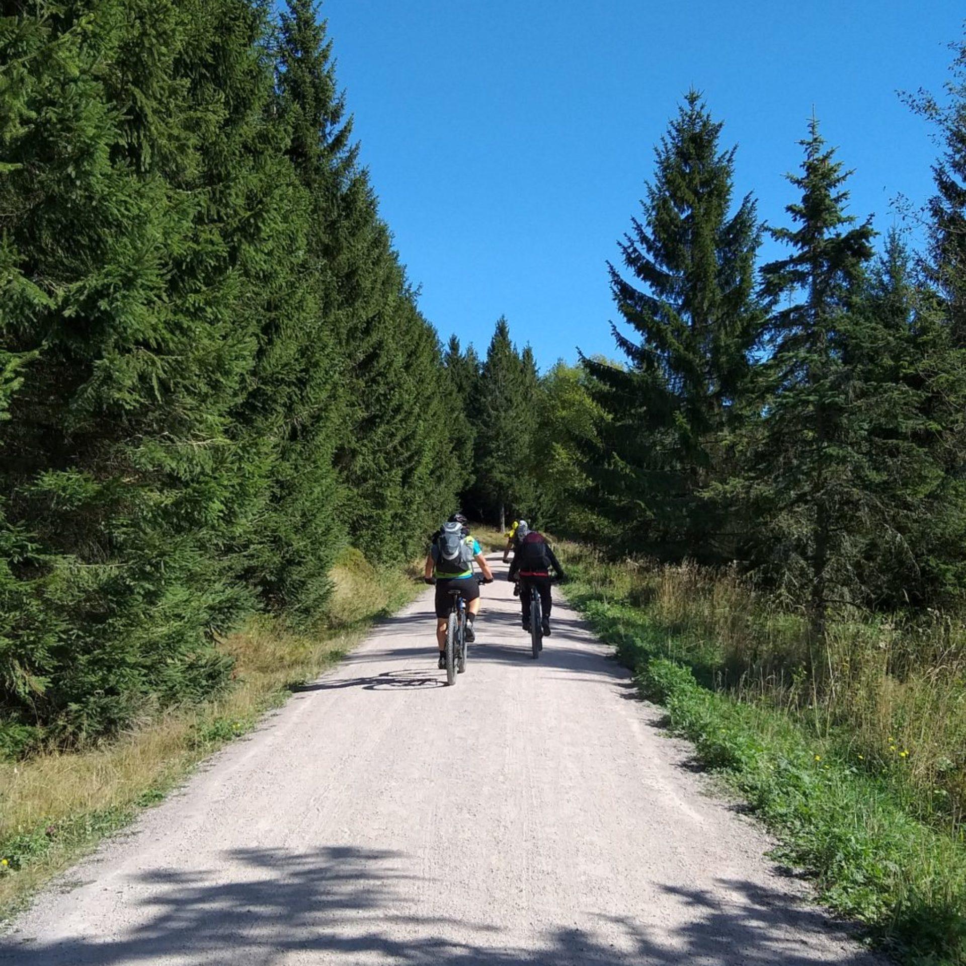 Radfahrer auf dem Rennsteigradweg © Werratal Touristik e. V.